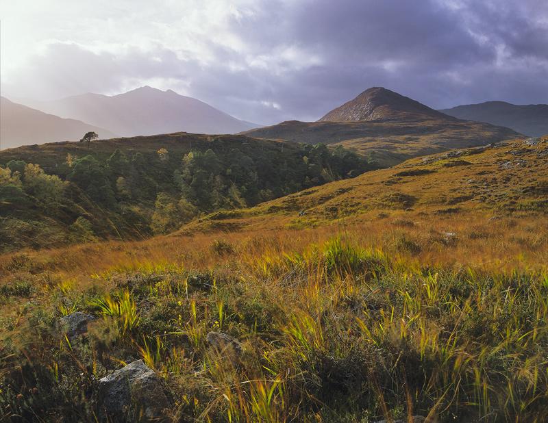 Breaking Light Strathfarrar, Strathfarrar, Highland, Scotland, autumn, afternoon, orange, deer grass, backlighting, bir photo