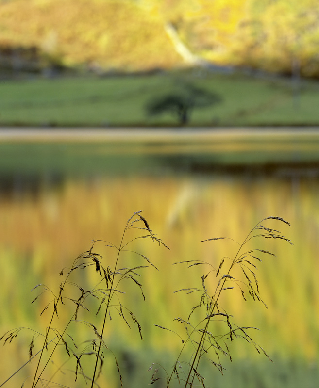 Cannich Sedge, Glen Cannich, Highland, Scotland, sheltered, river, ponds, quiet, reflections, spindly, stir, blurry, sil photo