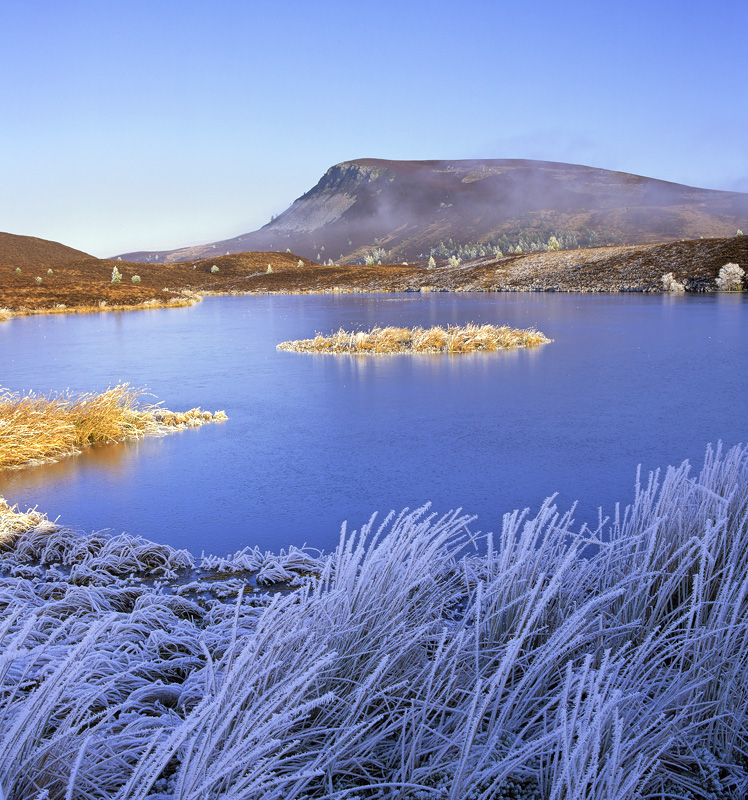 Cold Medallion, Dava Moor, Highlands, Scotland, gold, medals, winter, lochan, frozen, golden, medallion, sunlit, frost,  photo