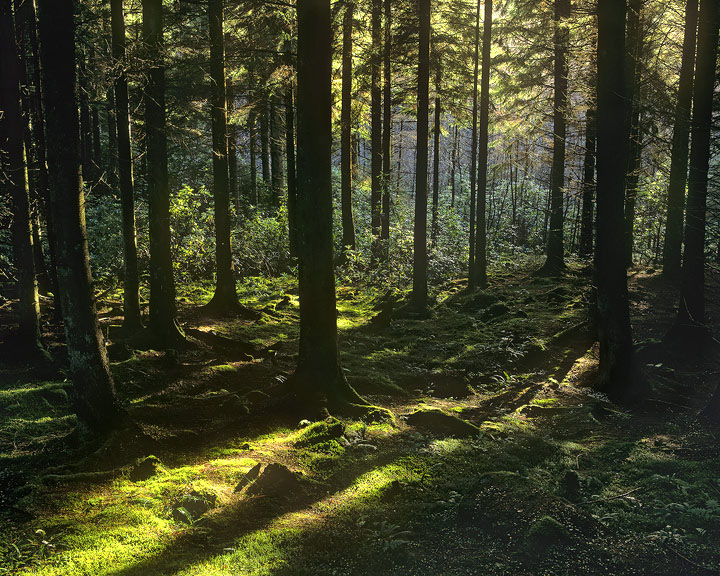 Conic, woods, Lomond, Scotland, woodland, pine, light photo