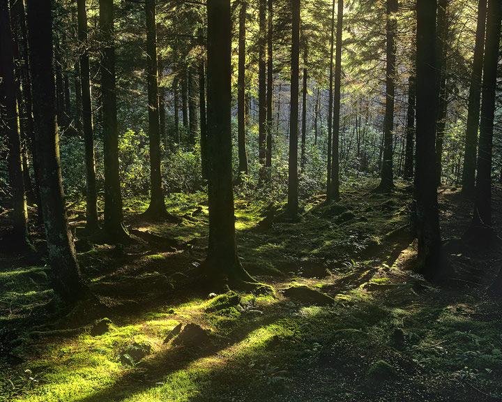 Conic, woods, Lomond, Scotland, woodland, pine, light photo