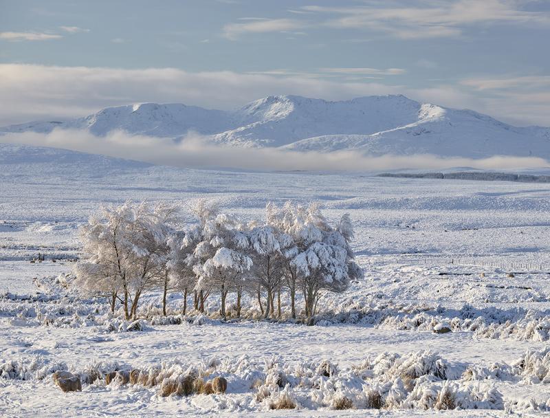 Crask Inn Birches, Crask Inn, Sutherland, Scotland, softly, lit, warmth, clouded, cooler, birches, light photo