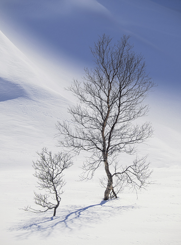Curvaceous, Bothkollen, Anderdalen Nat Park, Norway, pleasure, impression, perfection, beautiful, trees, winter, unspoil photo