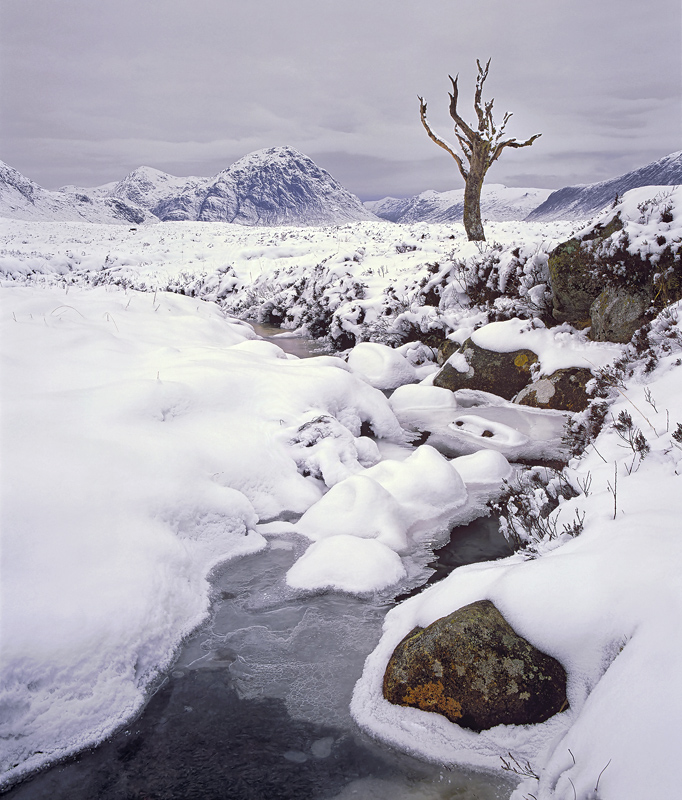 Dead And Buried, Rannoch Moor, Glencoe, Scotland, iconic, tree, succumbed, dead, sentinel, peaks, snow, winter, soft   photo