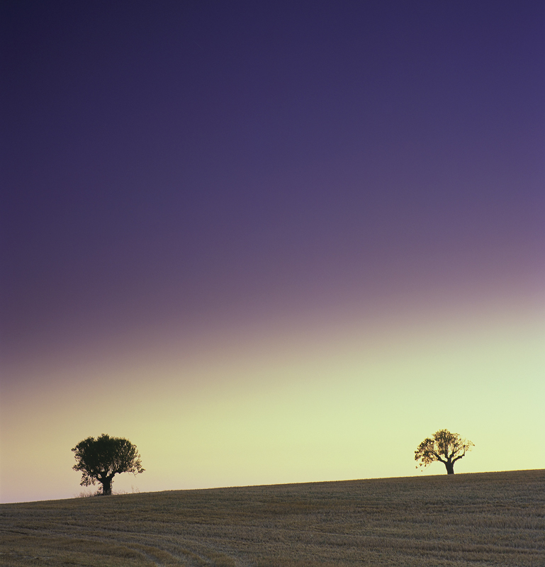 Deux Arbres, Mezel, Provence, France, evening, twilight, Provencal, Valensole, sunset, oak, trees, gradient, colour, whe photo