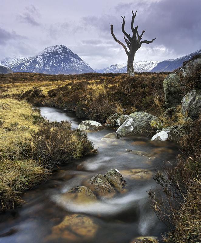 Devil Tree Rannoch Moor Glencoe Scotland Transient