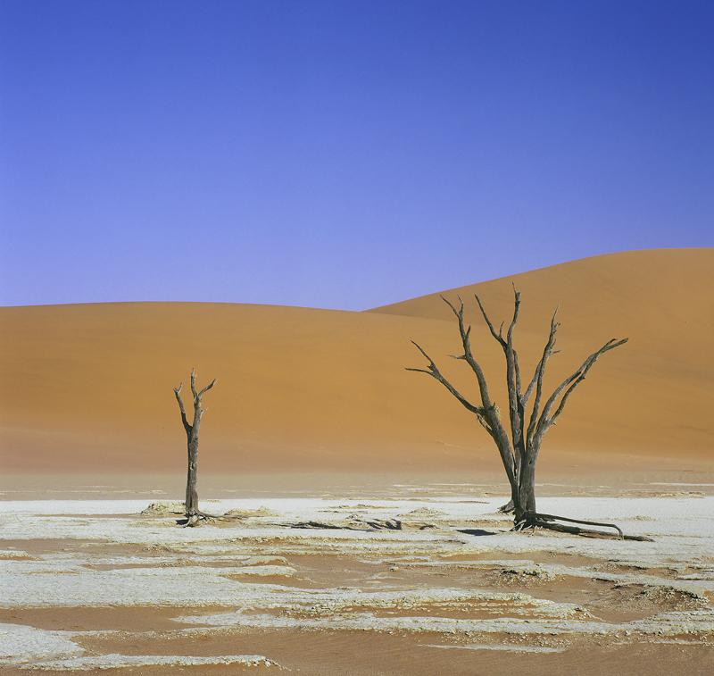 Dry Vlei, Dead Vlei, Sossusvlei, Namibia, Camel Thorn trees, salt pan, surreal, primary, colours, clear, blue, sky, oran photo