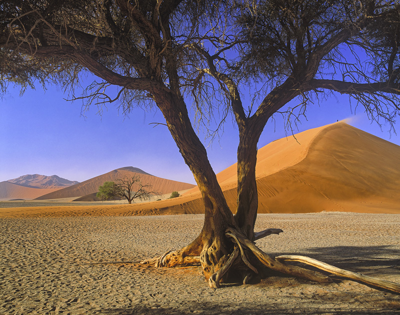 Dune 45, Sossusvlei, Namibia, Africa, sand dune, tourists, tree, person, scale, glowing, orange, blue, sky, wind, jet,   photo