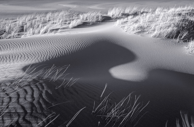 Dune Genie Mono, Red Point, Torridon, Scotland, black and white, sculpted, twisted, shapes, dune, grasses, rippled, sand photo