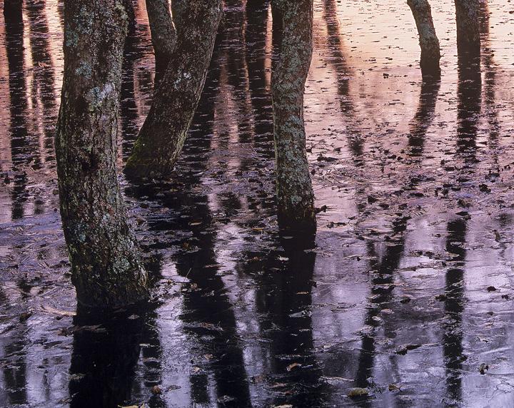 Woodland Freeze, Kingussie, Cairngorm, Scotland, flooding, sunset, pink, indigo, blue, shadows photo