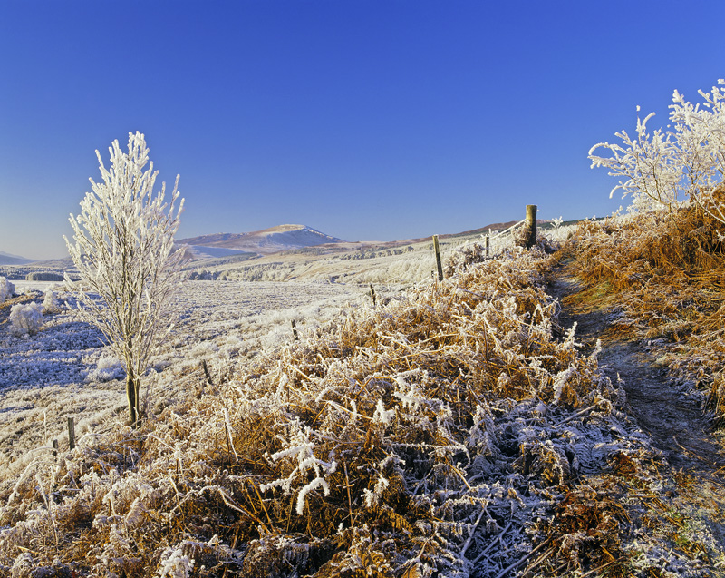 Ginger Ice, Loch Achanalt, Achnasheen, Scotland, spectacular, azure, blue, sky, bracken, rime, ice, frozen, frosted, bir photo