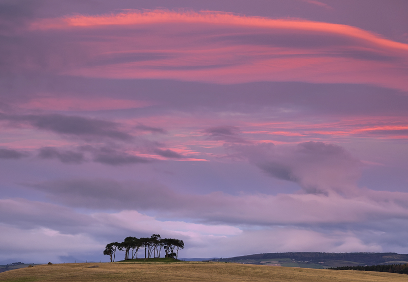 Gollanfield Dawn, Gollanfield, Highlands, Scotland, moonset, moon, Scots pine, copse, disc, horizon, pink, sunrise  photo