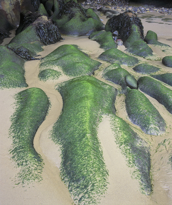 Green Fingers, Cove Bay, Moray, Scotland, rocky, coves, sandstone, bays, colour, pebbles, stones, fingers, seaweed photo