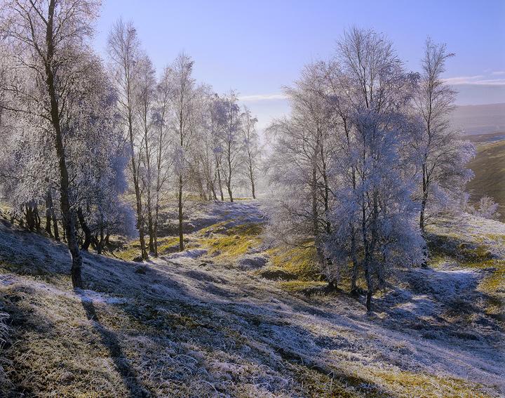 Hoar Frost Dava, Dava Moor, Moray, Scotland, birch, copse, wispy, branches, twigs, filligree, freezing, crystalline, fro photo