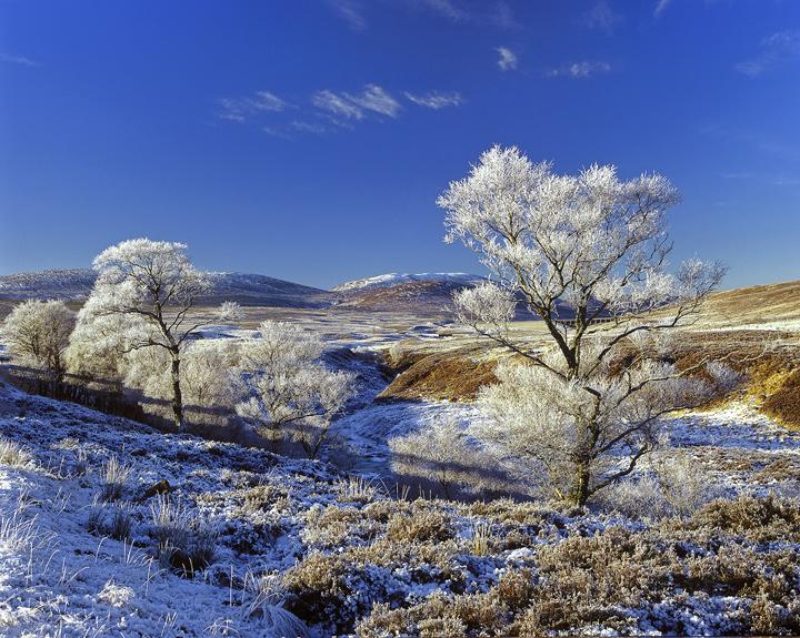 Hoar Frost, Loch Glascarnoch, Highlands, Scotland, birch, frost, snow, magic, transform, winter, paradise, flecks, cloud photo