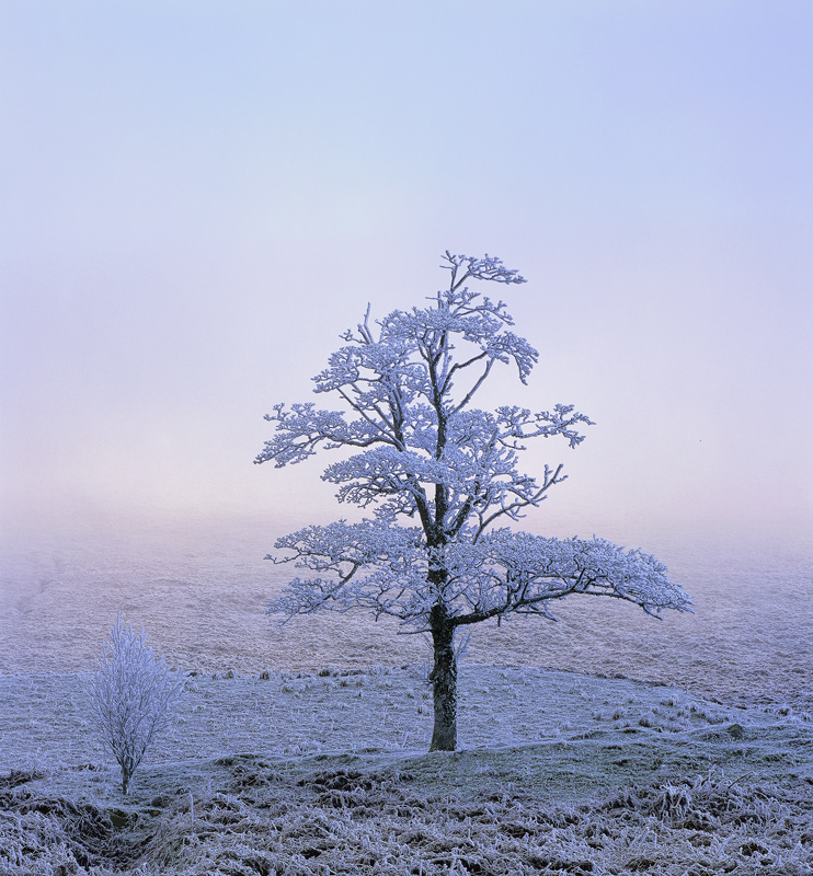 Iced Birch, Loch A Chroisg, Achnasheen, Scotland, shrouded, impenetrable, freezing, mist, hoar frost, temperatures, sun, photo