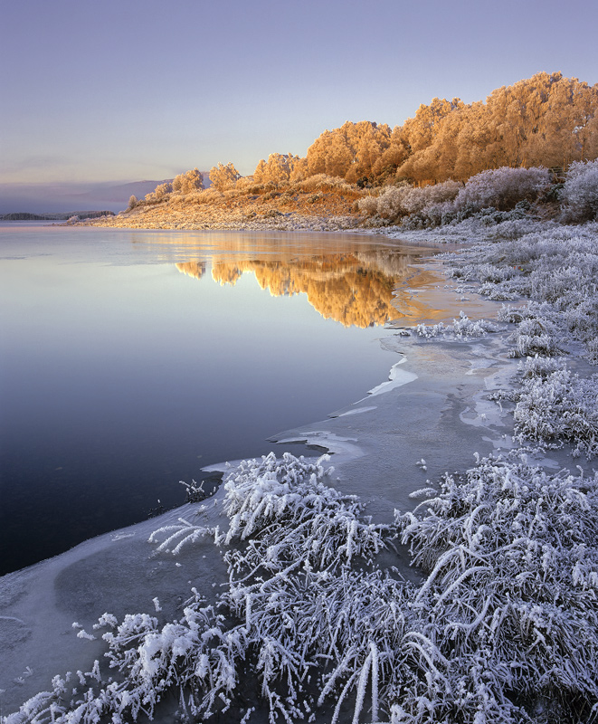 Iced Ginger, Loch Achanalt, Strathbran, Scotland, sliver, caramel, sunrise, frosted, birch, trees, ginger, cool, warm, b photo