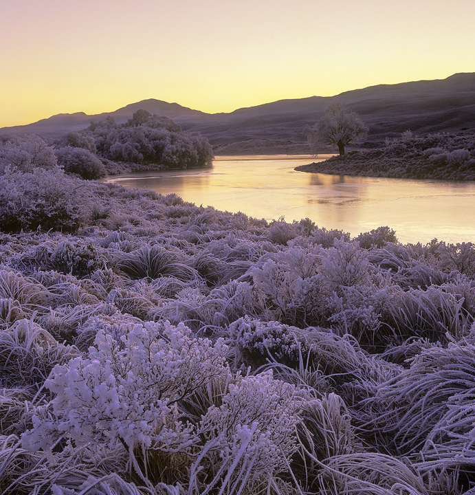 Iced, Loch Achanalt, Strathbran, Scotland, frost, beautiful, sunrise, iced, grass, river, solitary, tree, outline, froze photo