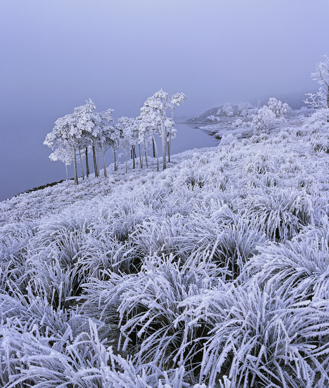 Jack Frost, Loch A Chroisg, Achnasheen, Scotland, minus, Celcius, lowest, grasses, hoar frost, misty, crust, ice  photo
