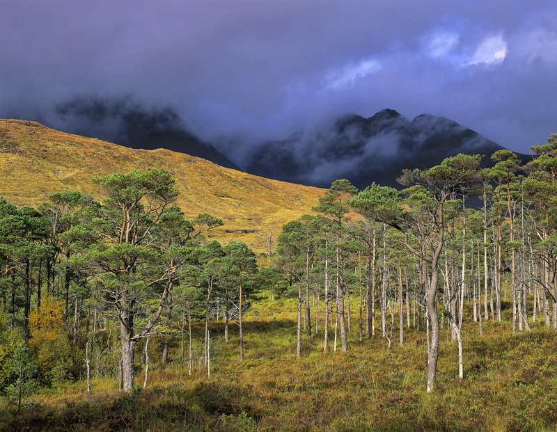 Last Light Torridon, Torridon, Highlands, Scotland, fleeting, light, illumination, Scots Pine, subdued, thuderously dark photo