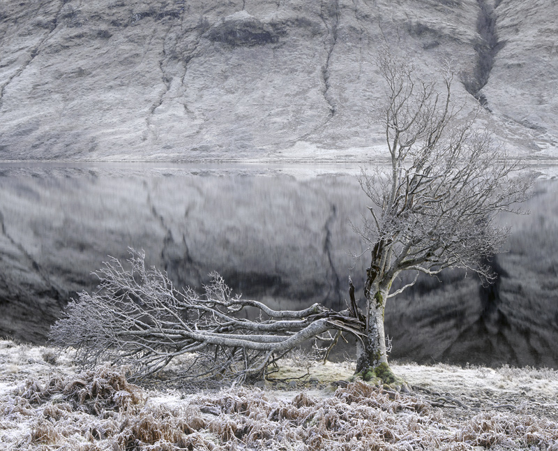 Lightning Tree, Loch a Chroisg, Achnasheen, Scotland, old, tree, lightning, frost, magnificent, broken, limbs, desolatio photo