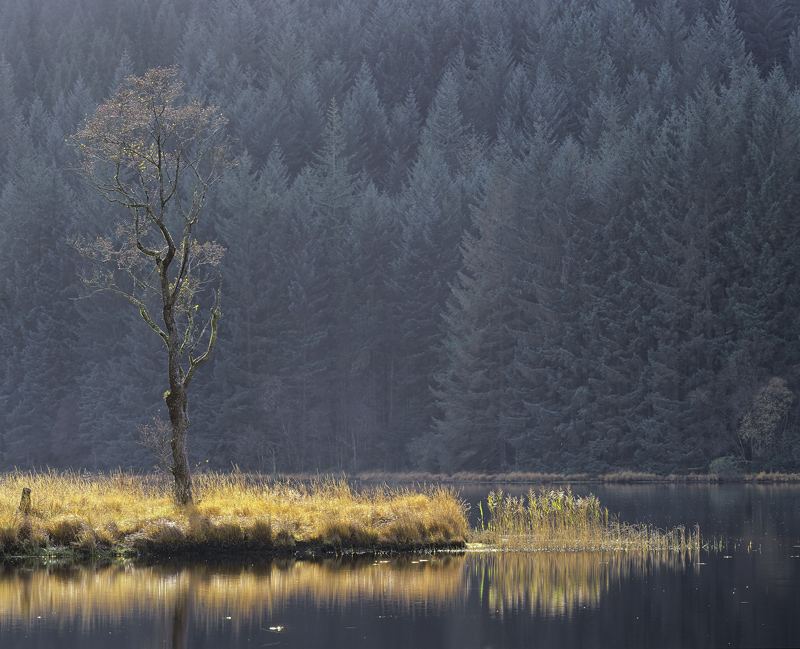 Lone Birch Chon, Loch Chon, Trossachs, Scotland, mist, threads, pine wood, hillside, birch, tree, backlighting, spit   photo