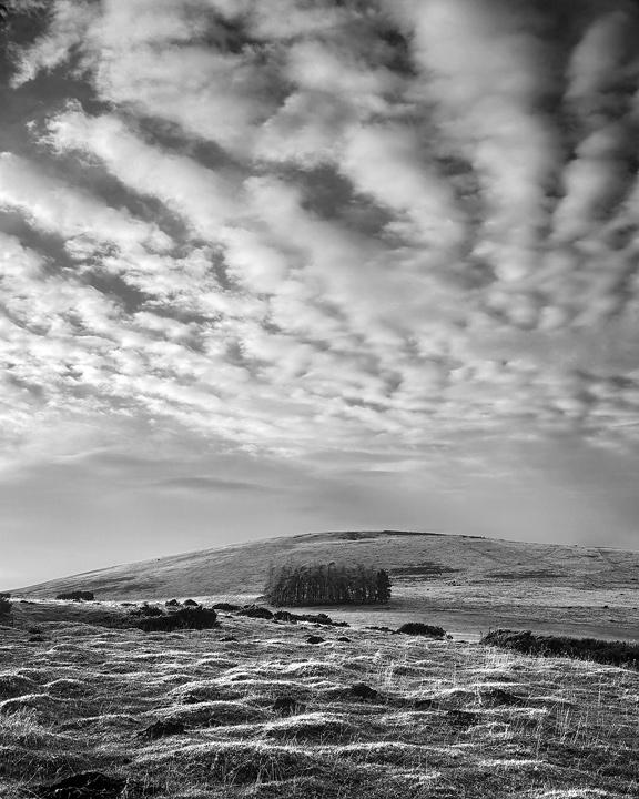 Lone Copse Mono, Glenlivet, Spey Valley, Scotland, sky, lines, pattern, texture, black and white, hills, copse, cloud   photo