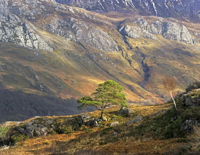 Love Thy Neighbour, Loch Maree, Torridon, Scotland, isolated, scots pine, emerald, green, maroon, birch, brush, tree, Sl photo