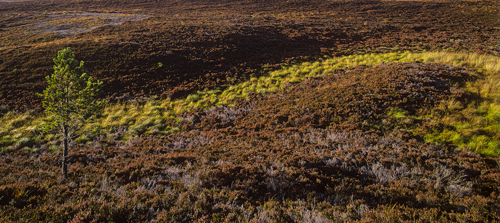 Meander, Dava moor, Moray, Scotland, green, stream, pine, patterns photo