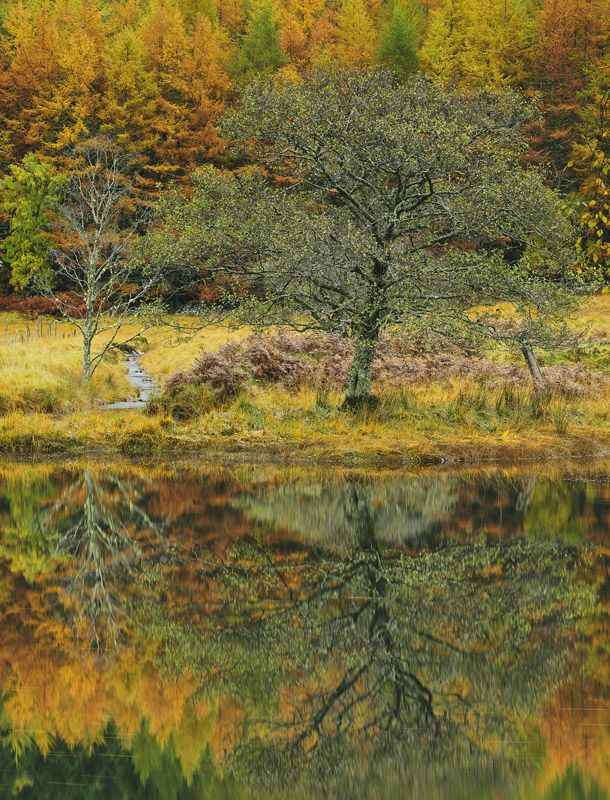Mirrored Tree Cannich, Glen Cannich, Highlands, Scotland, adored, tree, autumnal, river, reflections, larch, birch, pris photo