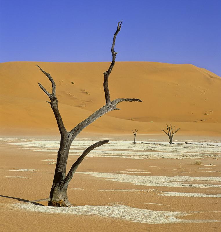 Parched Dead Vlei, Dead Vlei, Sossusvlei, Namibia, deceased, Camel thorn trees, orange, desert, pans, ferrous, dunes, bl photo
