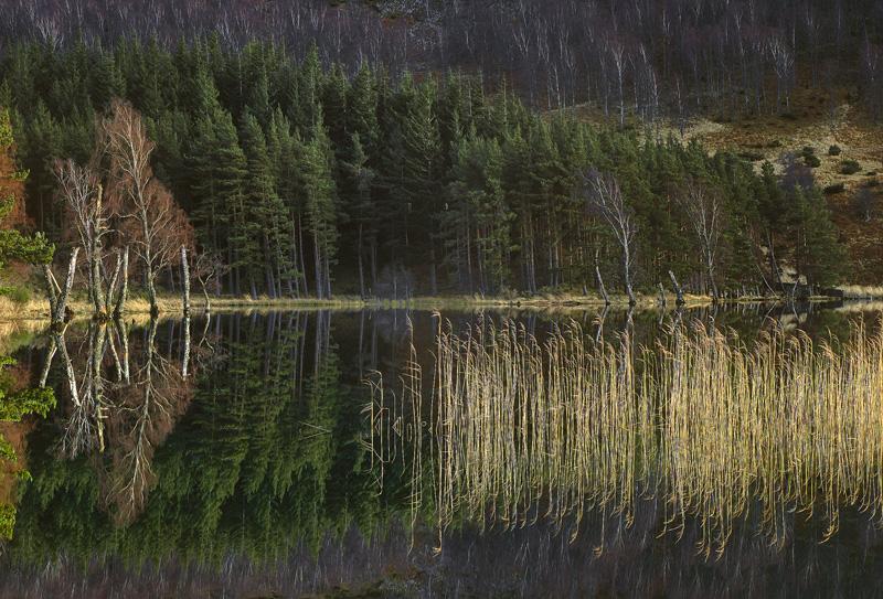 Pityoulish Reeds and Reflection, Loch Pityoulish, Highlands, Scotland, still, autumnal, Cairngorm, mountains, ray, golde photo