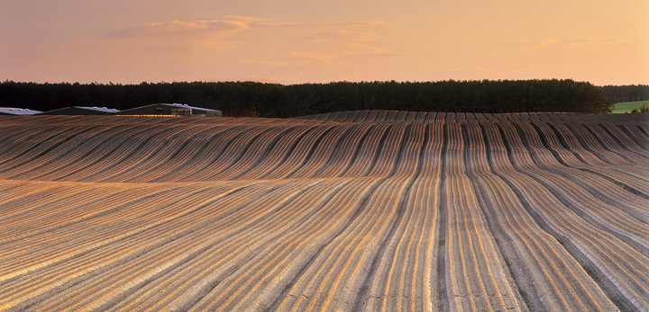 Plough lines Roseisle, Roseisle, Moray, Scotland, low, raking, light, apricot, sunlight, winter, village, lines, plough photo