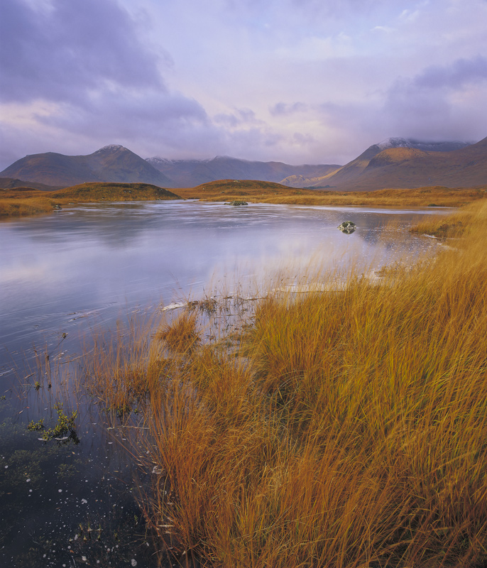 Rannoch Ginger, Rannoch Moor, Glencoe, Scotland, orange, deer grass, reeds, Loch Na Stainge, autumnal, sunlight, Black M photo