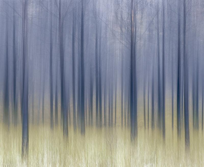 Savanna Torridon, Glen Torridon, Torridon, Scotland, pine, trees, grass, fire, singed, blackened, vaseline, smeared, tru photo