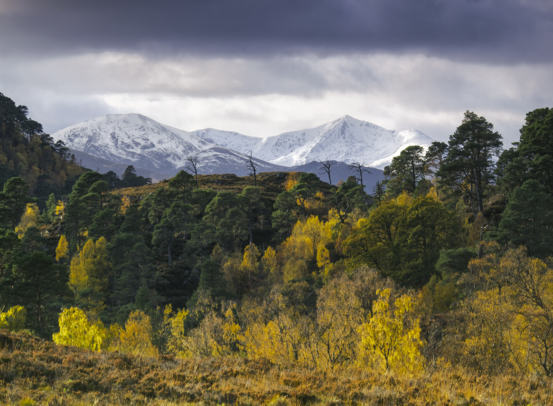Seasonal Transition Strathfarrar, Strathfarrar, Highlands, Scotland, birch, golden, radiant, snow, monochromatic, winter photo