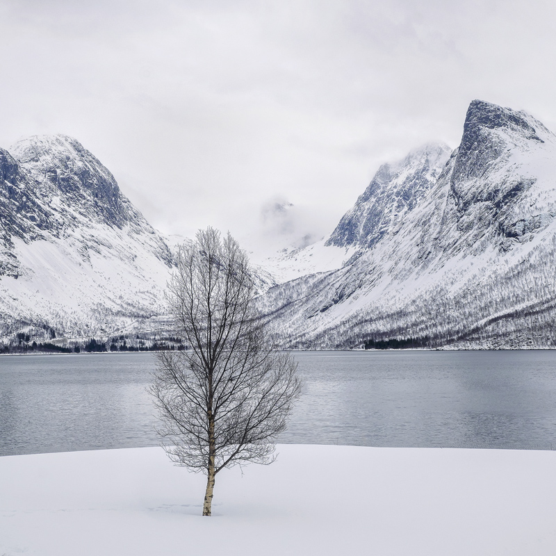 Senja Cube, Bergsbotn, Senja, Norway, favourites, magnificent, rugged, mountains, blasted, delicate, birch, fragility, l photo