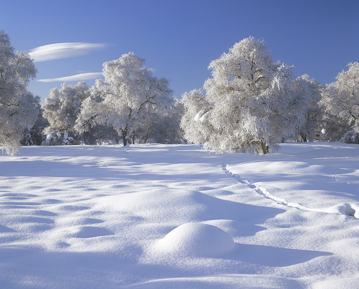 Snow Pillows, Ruthven Barracks, Cairngorm, Scotland, soft, fluffy white, pillows, snow, powder, fine, pristine, pure photo