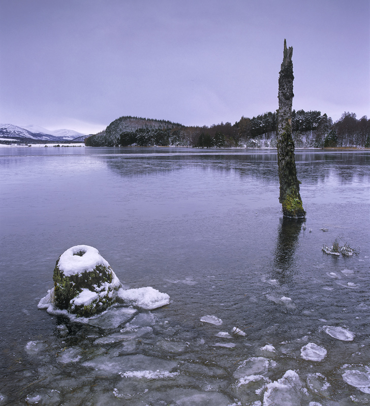 Snow Sentinel Pityoulish, Pityoulish, Cairngorm, Scotland, marooned, dead, birch, post, lce, snow, bole, grey, lead photo