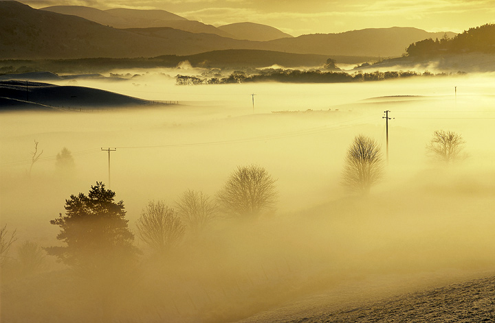 Spey Mist, Grantown, Speyside, Scotland, backlit, mist, river, Spey, sun, strikes, gold, silhouetted, shapes, trees  photo