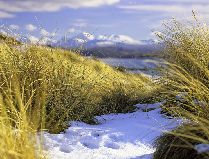 Rabbits Eye View, Big Sand, Gairloch, Scotland, winter, morning, Caolas Beag, sandy, bay, dunes, snow, stems, gold, Torr photo