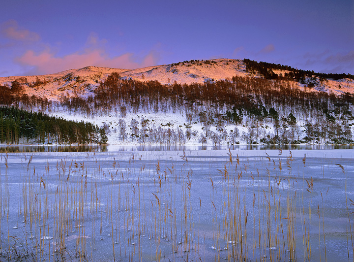 Sunset Loch Pityoulish, Loch Pityoulish, Cairngorm, Scotland, Aviemore, winter, snow, frozen, yellow, reeds, blue,  photo