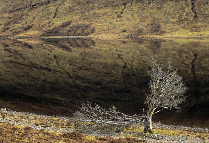 Time To Reflect, Loch a Chroisg, Achnasheen, Scotland, dead, tree, lightning, frost, skeletal, sun, silvery, brown photo