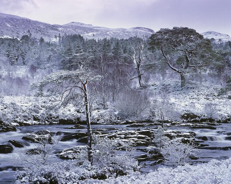 Torridon Pine Grove, Kinlochewe, Torridon, Scotland, snow, impressive, plantations, Scots Pine, native, trees, river photo
