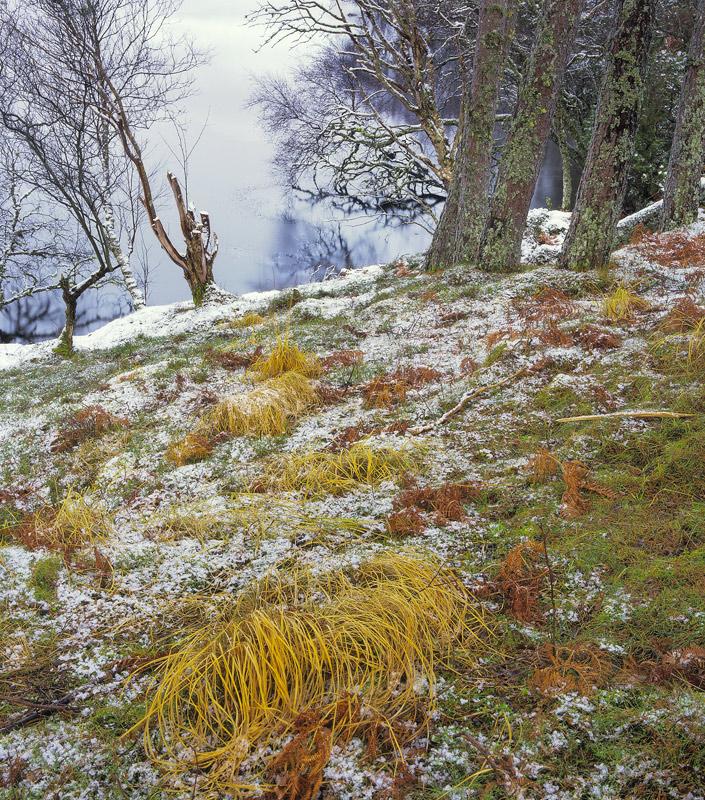 Tortoise Shell Culdromman, Loch Culdromman, Inverpolly, Scotland, sombre, overcast, sprinkling, snow, wet, grey, autumn photo