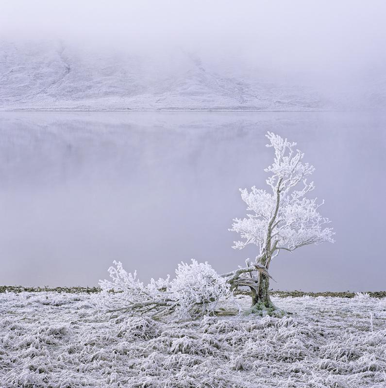 White Lightning Tree, Loch A Chroisg, Achnasheen, Scotland, tree, freeze, thaw, frozen, winter, hints, colour, ice, refl photo
