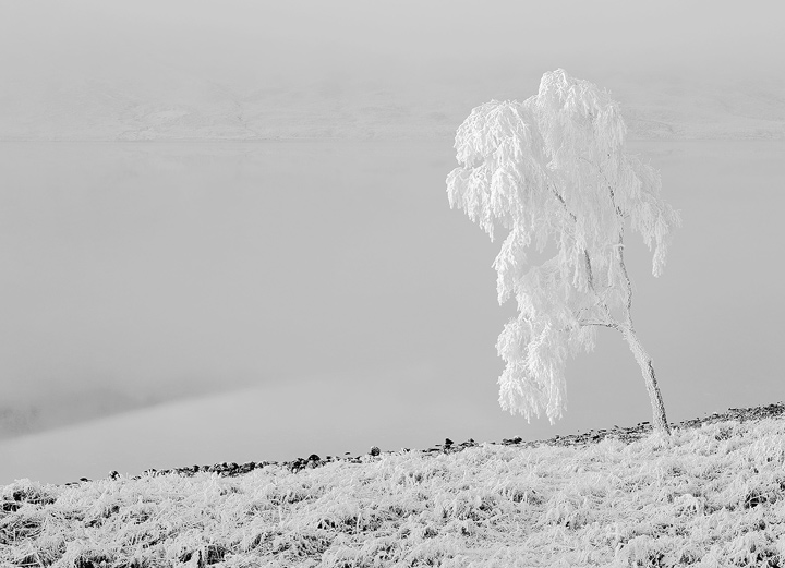 White, Loch A Chroisg, Achnasheen, Scotland, harsh, frosts, temperatures, low, minus, snow, bearded, tree, outline, old, photo