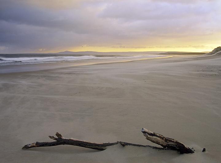 Windswept, Lossiemouth, Moray, Scotland, beautiful, soft, winter, light, sand, morning, wind, blown, wood, drifted, anch photo