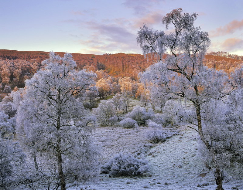 Winter Birch Lettoch, Lettoch, Spey Valley, Scotland, cold, Glen, river, salmon, birch, trees, isolated, hoar frost, col photo