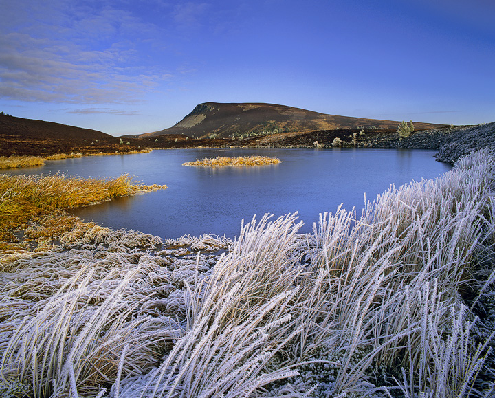 Winter Chill Dava, Dava Moor, Moray, Scotland, loch, Dava, golden, island, ice, blue, reeds, frosted, encrusted, sunligh photo